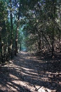 Fairy Woods path 2